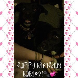 Accessories - TODAY 4/17 is MY BABYS BIRTHDAY!☺️🐾💞🎉🎈